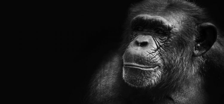 The Sociosexual Habits of Humans and Apes